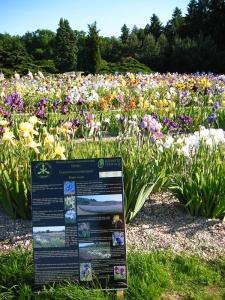 botanicka_zahrada_na_chotobuzi_b